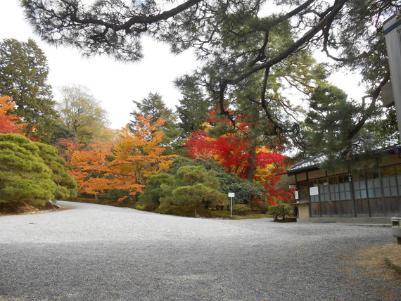The autumnal tints  of Katsura Imperial Villa