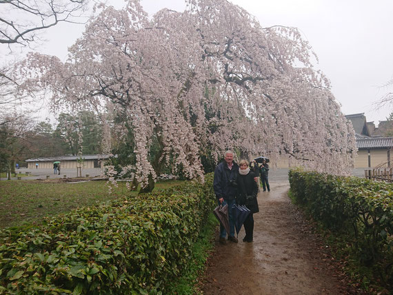 Kyoto Imperial Palace, Kyoto Gosho