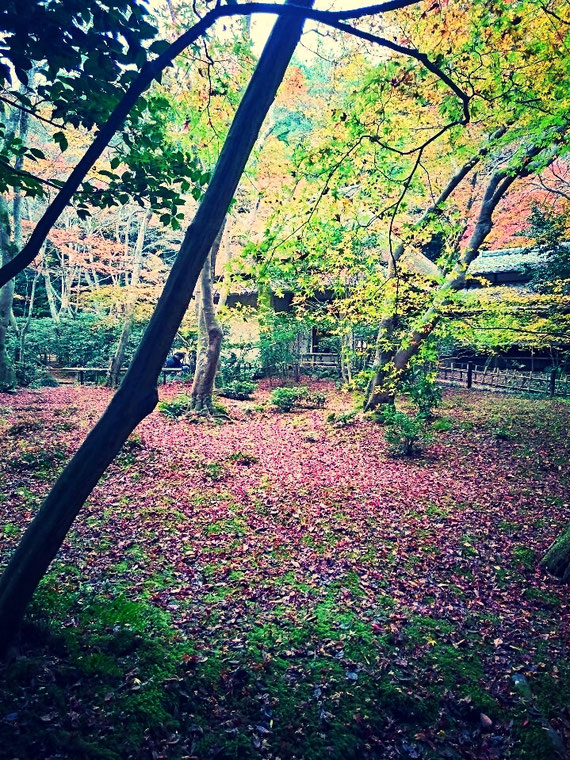 楓の散り紅葉
