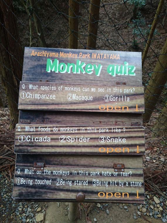 嵐山の猿山の楽園