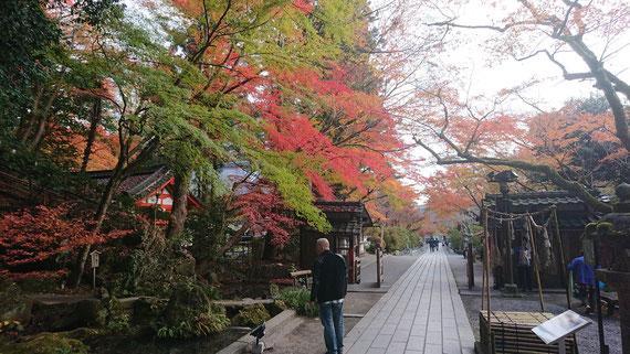 京都観光タクシー 永田信明 Nobusan