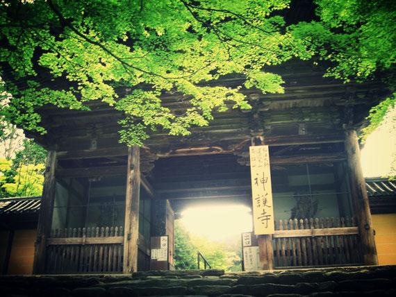 Jingoji Temple of fresh green in Takao eria