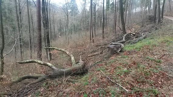 Waldbewirtschaftung Pfälzerwald 2017