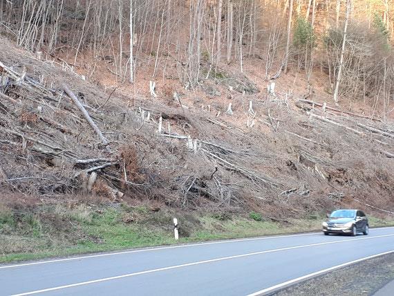 """Januar 2020: Waldrand an der B 37 - sollen so """"stabile Waldränder"""" entstehen, wie vom LBM (Landesbetrieb Mobilität) angeblich entlang der Straßen angestrebt?"""