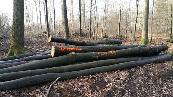 Pfälzerwald, Dezember 2019: Wofür wollen wir unsere Bäume fällen? Können wir wirklich uneingeschränkt den Markt im Klimawandel bedienen?