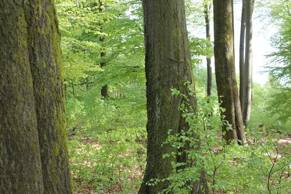 Bürgerwut gegen die sinnlose Zerstörung alter Waldgebiete in Deutschland