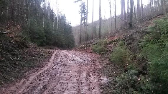 Waldbewirtschaftung Pfälzerwald 2018