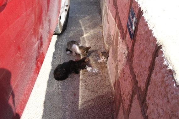 Unsere Kätzchen.