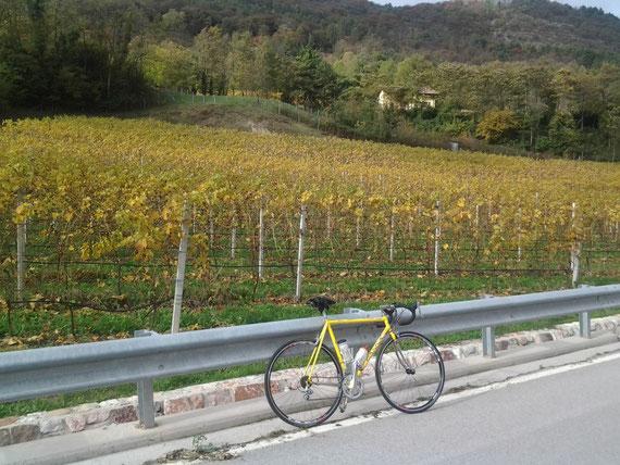 autunno ,  vitigni
