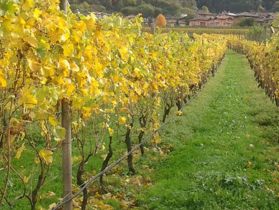 autunno , vitigni  in  val  di  cavedine