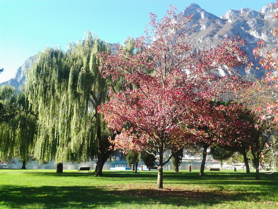 autunno ,  lungo lago a riva del  garda