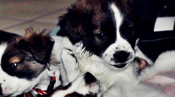 Baisy, Bella & ich; ca. 7 Wochen alt