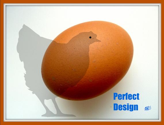 auweia, der Hahn legt keine Eier - das Ei lag auf dem Küchentisch