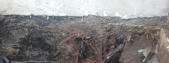 Hinter falsch  verklebten Bitumenbahnen konnten sich die Wurzeln ausbreiten und die Abdichtung absprengen