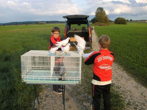 Die Jugend für Tauben im Freiflug zu begeistern