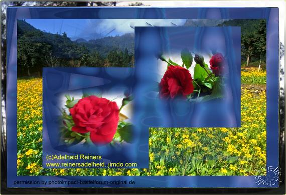 Collage 19 mit eigenen Rosen