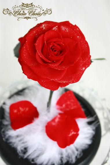 プロポーズ 美女と野獣 一輪の薔薇 ガラスドーム プリザーブドフラワー オーダーメイド
