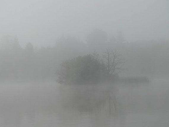 gespenstische, morgendliche Nebelfelder am Lough Key