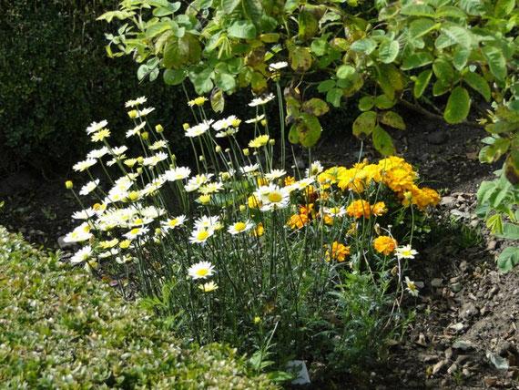 wunderschöner Garten beim Tully Castle