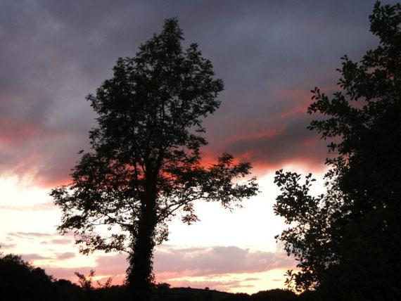 mal ein Baum