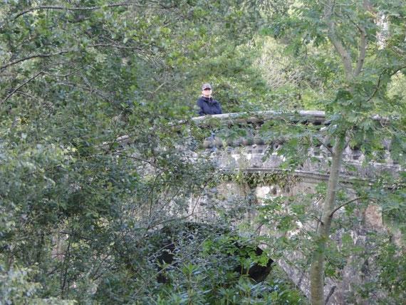 romantische Brücke im Lough Key Forest Park