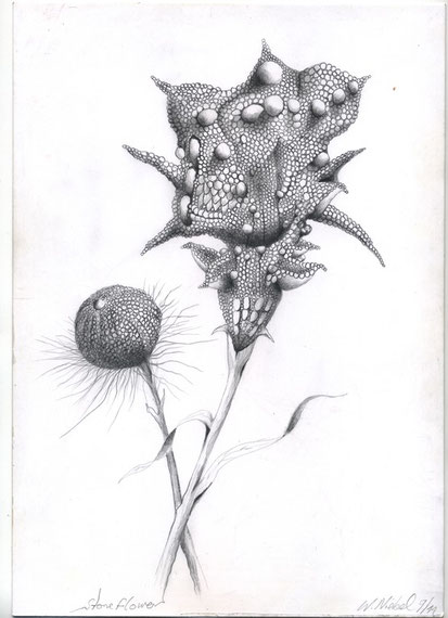 Stoneflower  30x21 Bleistift 9. 2011