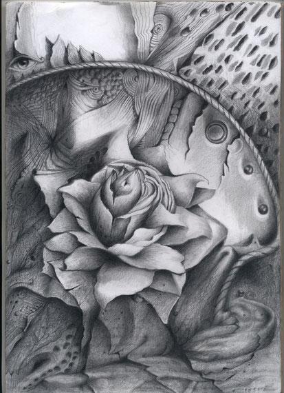 Rose  im Asphalt 30x21 Bleistift       6. 2011