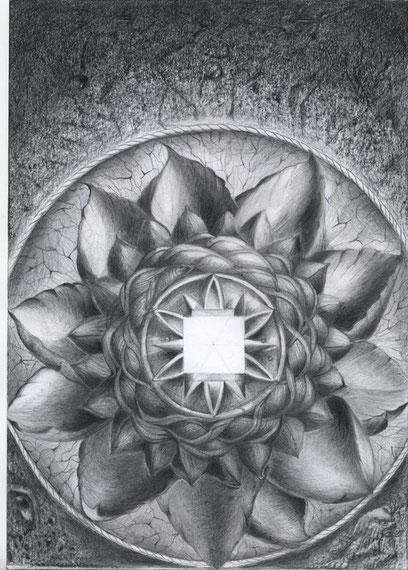 Lotus 30x21 Bleistift   2. 2011