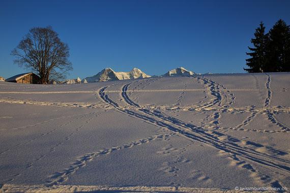 Beatenberg-Waldegg, Blick Richtung Eiger, Mönch und Jungfrau