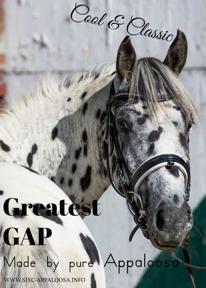 Appaloosa Old-Line | Appaloosa Foundation Foundaloo(sa) | Appaloosa Sport Horse | Appaloosa Classic | By SIX C Appaloosa