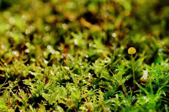 ミクロな緑の世界