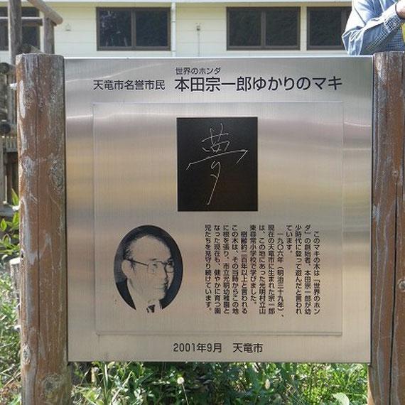 本田宗一郎さんが幼少時代に上って遊んだマキの木