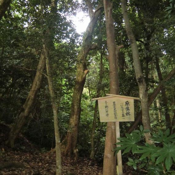いらずの森(気多大社)