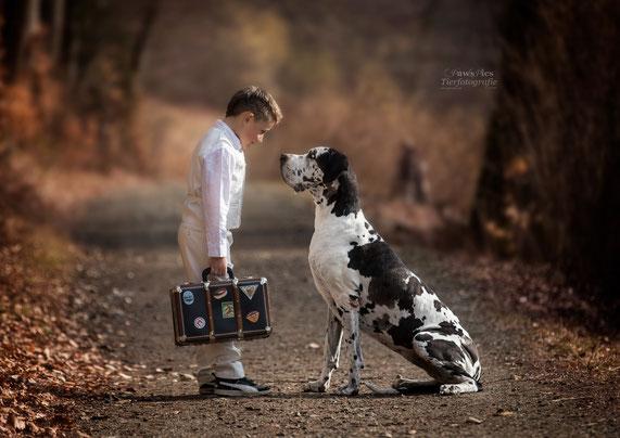 Tierfotografie, Hundebilder, Hundefotos, Hundefotografie, Tierfotograf, Nina Fisler, PawsPics, Dogge, Great Dane
