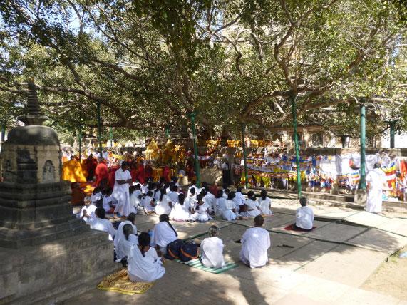 成道の聖地に集う仏教徒