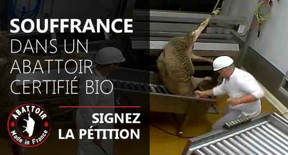 Exemple d'affiche dénonçant les maltraitance animale dans les abbatoirs