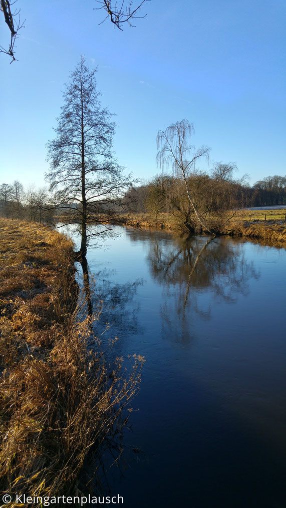 Flußufer Richtung Süden mit Birke, die sich im Wasser spiegelt