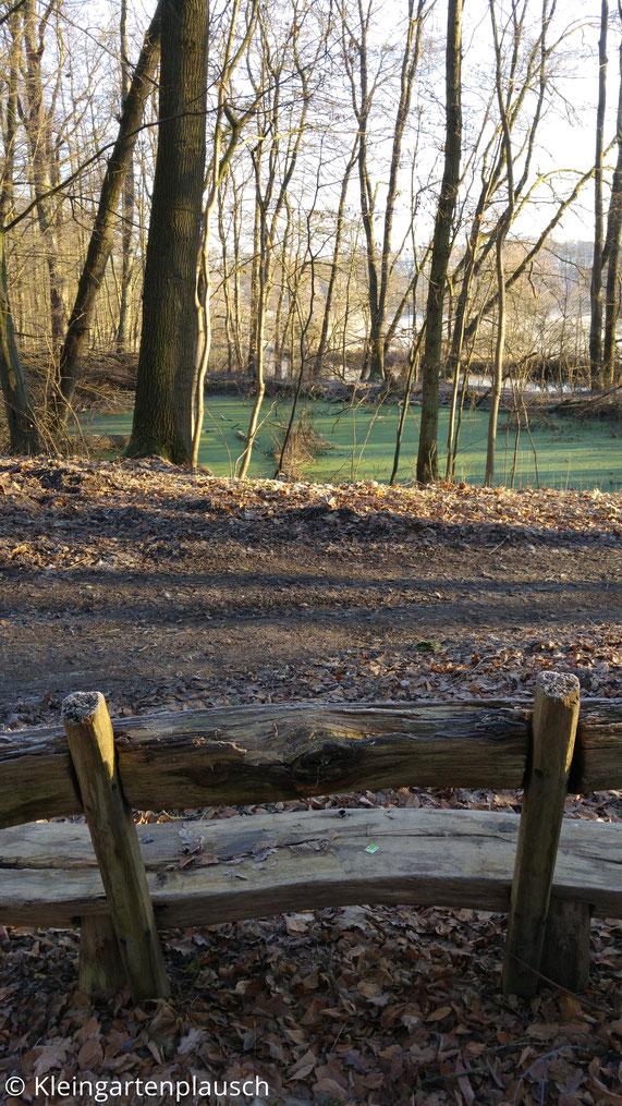 Kleiner grüner Waldtümpel, im Vordergrund Holzbank zum Verweilen