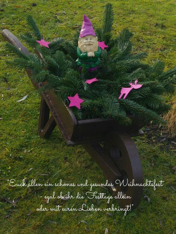 Weihnachtszwerg mit pinker Mütze ín der Schubkarre mit Tannengrün  im Kleingarten