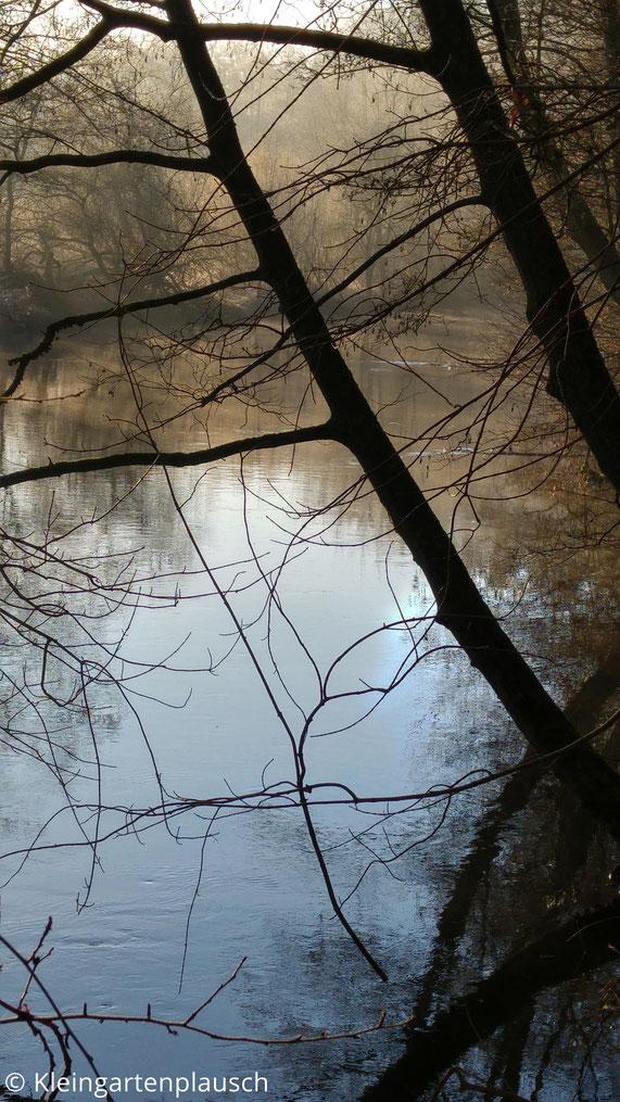 Bäume am Ilmenauufer