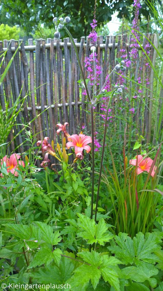 Blattwerk der Herbstanemone, orange Lilienblüten