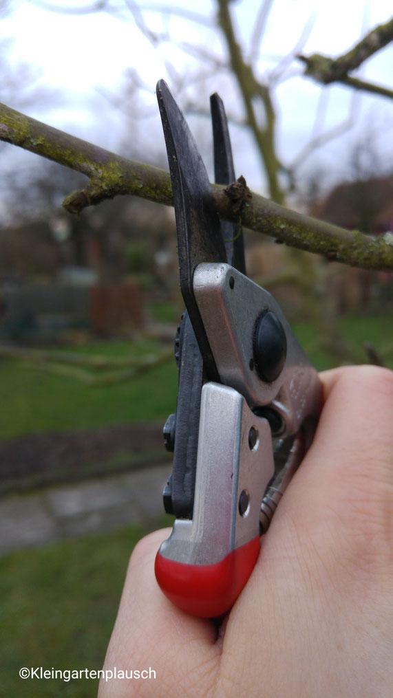Mit der Gartenschere in der Hand winterschneide ich mich durchs Apfelbaumland ;-)