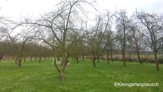 Eine grüne Wiese mit laublosen Obstbäumen, im Hintergrund liegt eine weiße Leiter auf dem Boden
