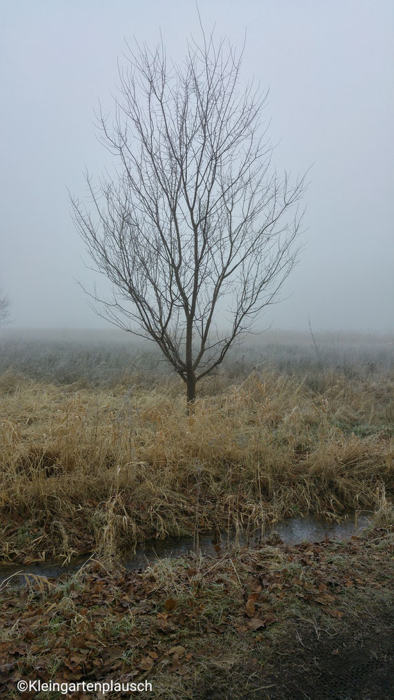 E i n Baum auf der Nebelwiese?