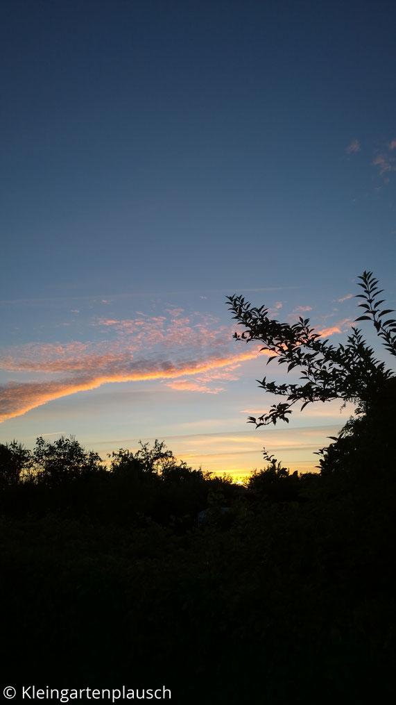 Farbprächtiger Sonnenuntergangshimmel hinter Baumschatten