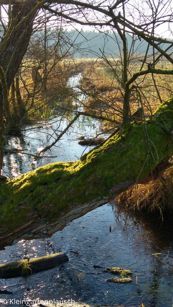 Vermooster Baumstamm über Graben mit blauem Wasser