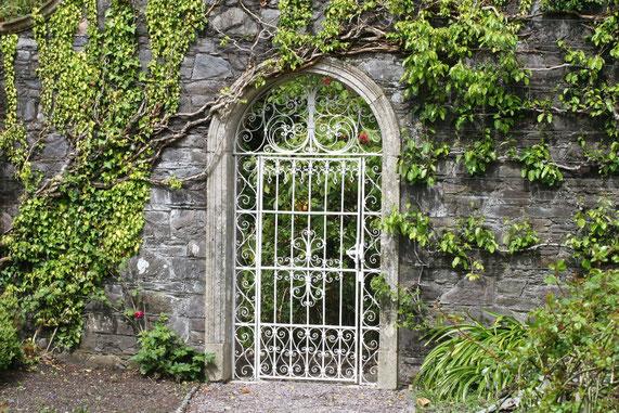 Weißes geschmiedetes Gartentor in einer bewachsenen Mauer auf Garnish Island