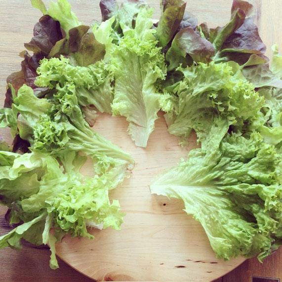 Schritt 1: Den Salat großzügig auslegen.