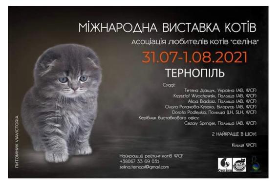 2021, Scottish Fold Katze (Qualzucht) auf Plakat als Werbeträger für WCF-Katzenausstellung