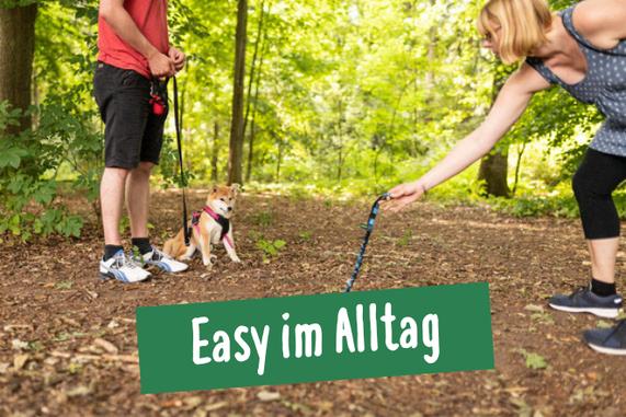 Hundetrainerin und Hundebesitzer machen im Kurs in der Hundeschule in Hamburg Altona eine Übung mit dem Hund